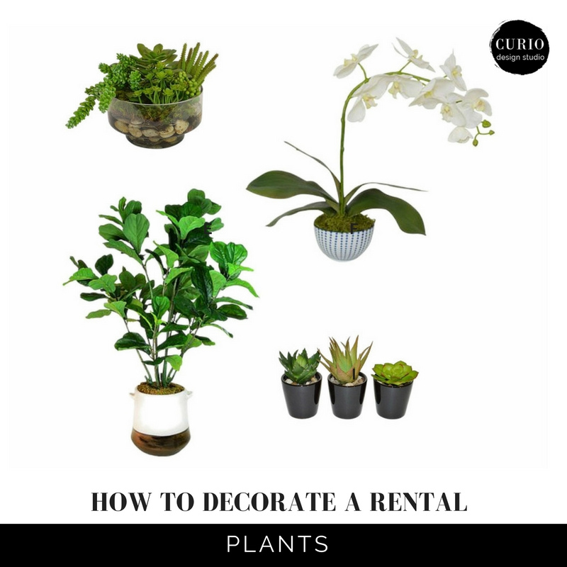 how to decorate a rental_Plants