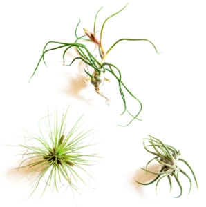 air-plant-wall-holders-2