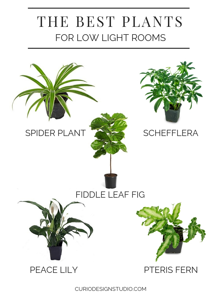 Flowerworks Collaboration Series The Best Plants For Low